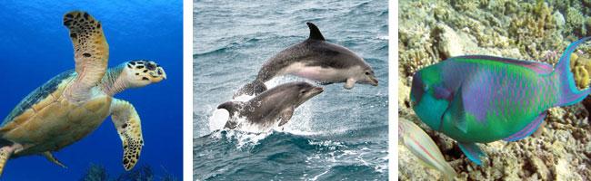 Panama Marine Species