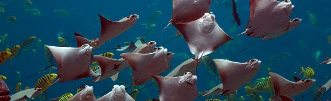 Snorkel in Panama